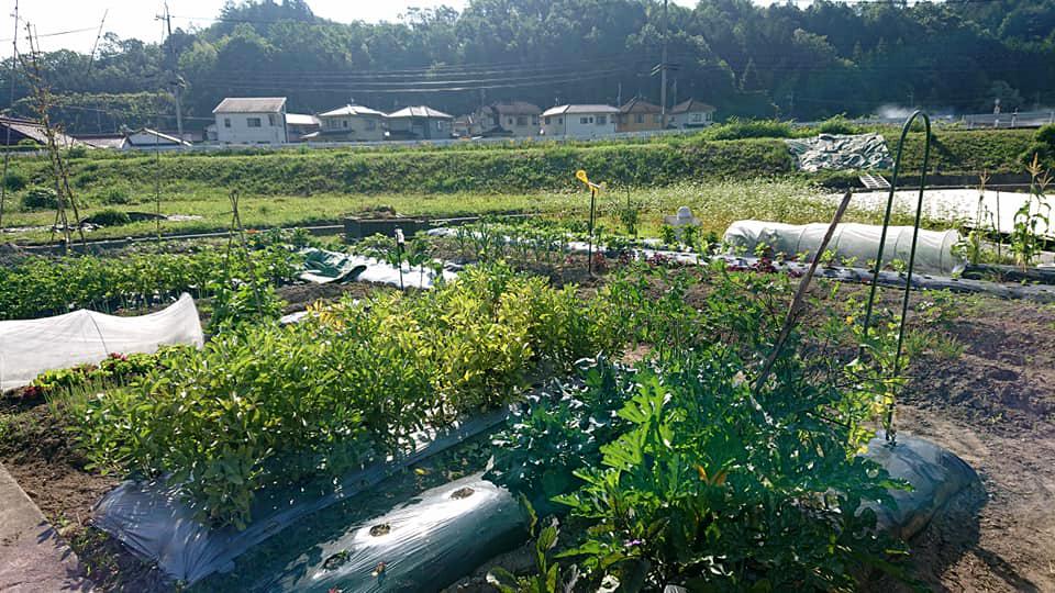 ローカルWEBメディア・地域サイト 草加ローカルストーリー 金澤萌さん LEAD写真